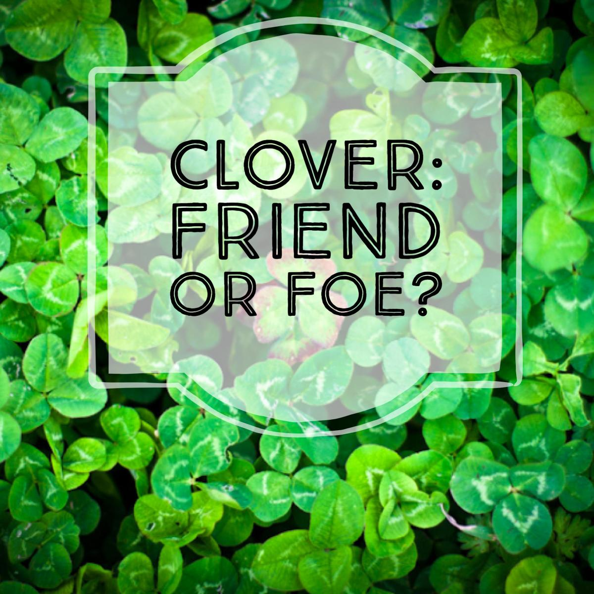Clover requires less water, fertilizer, compost, herbicide, and weeding.