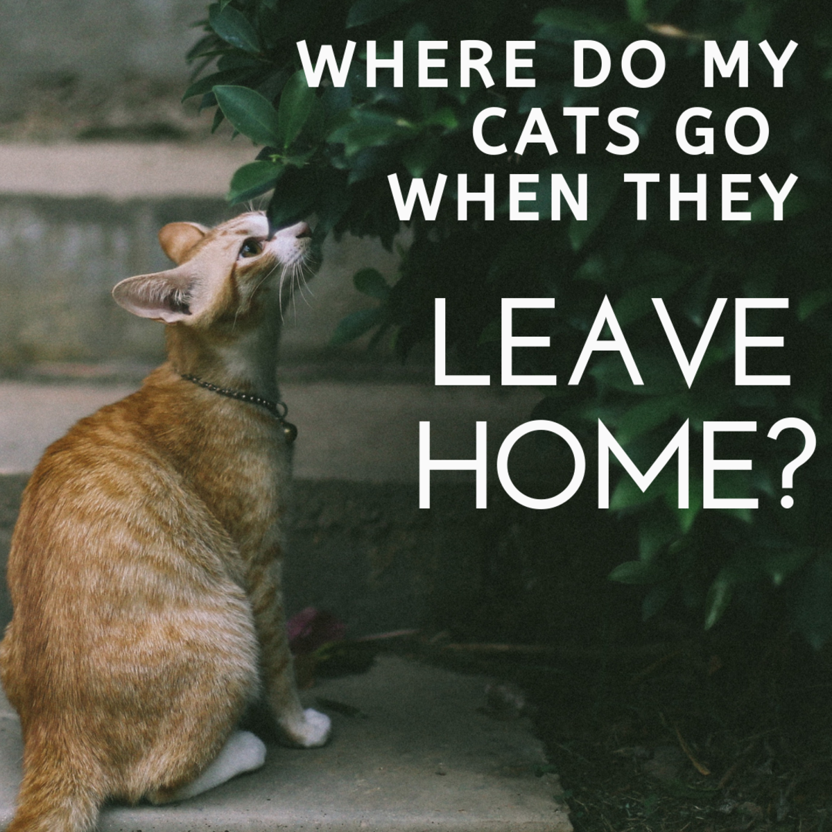 Where Do Your Cats Go When They Leave Your Home?