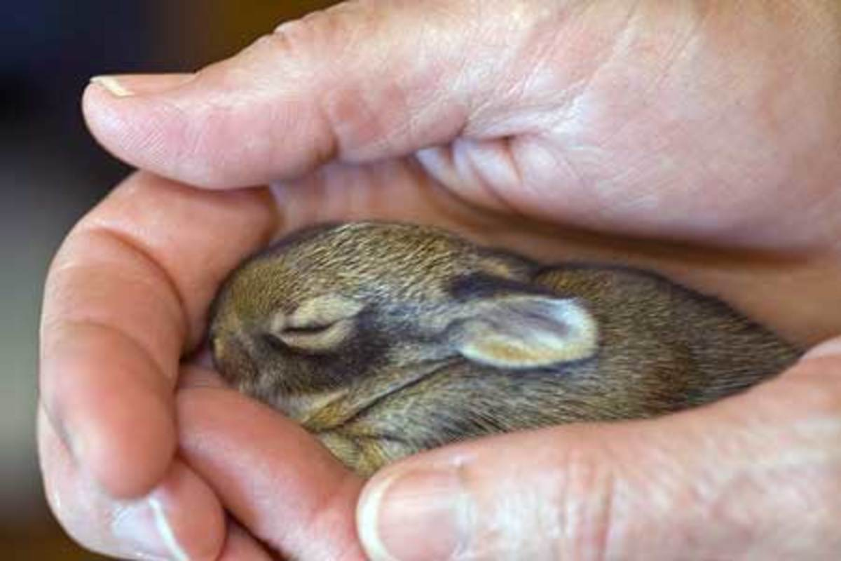 Best Bunnies For Children