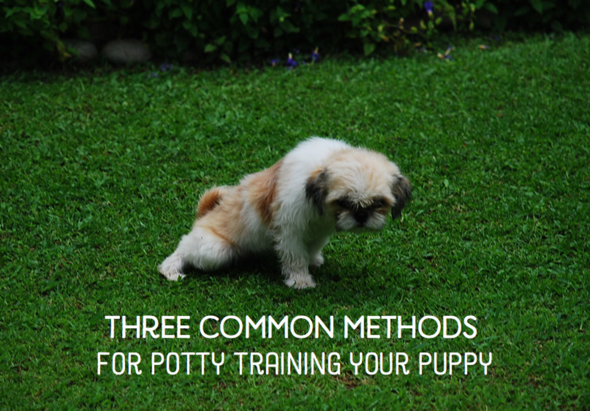 3 Ways to Potty Train a Puppy