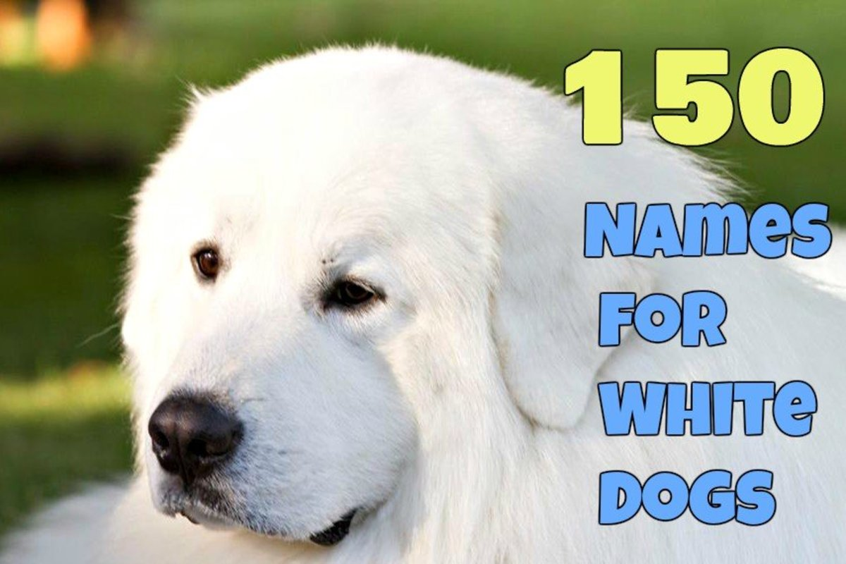 150 Best Names for White Dogs By Size for Males and Females