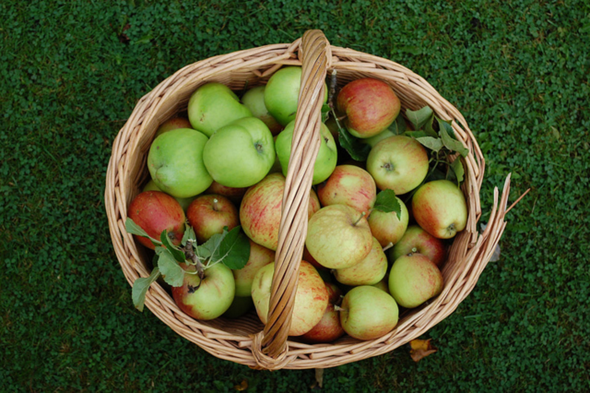 Mabon is a time of harvesting the crops ready to be stored and enjoyed over winter.