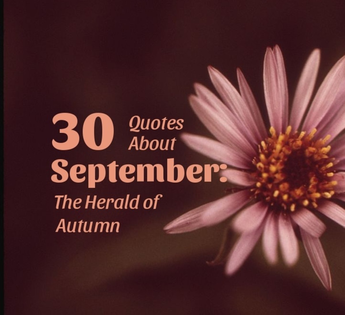The aster is one of September's birth flowers.