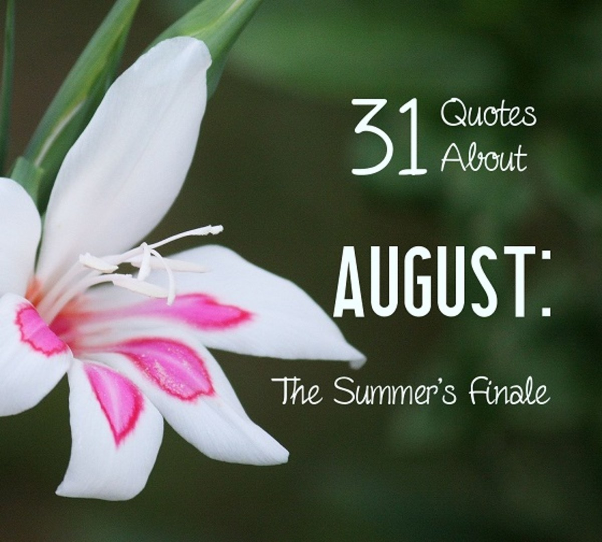 The gladiolus is one of the official flowers of August.