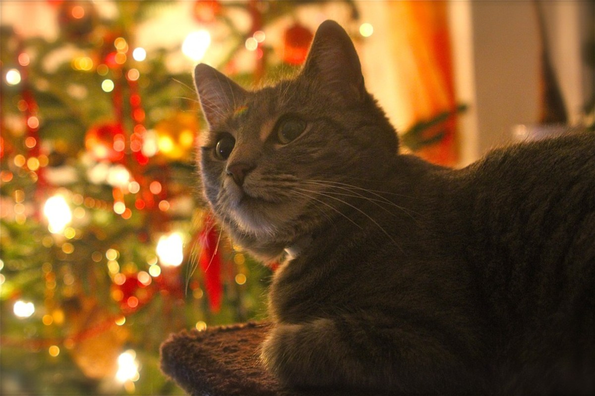 Christmas Poems For And About Pets