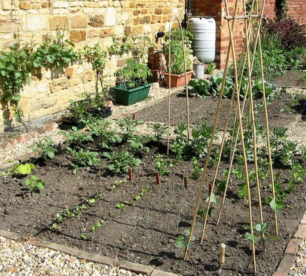 Image Result For How To Start A Lasagna Garden