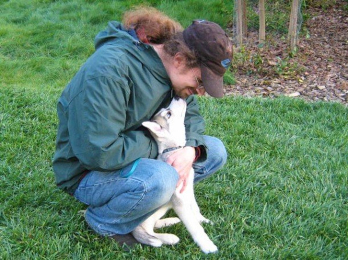 Dog Discipline: Does Hitting and Beating a Dog Work?