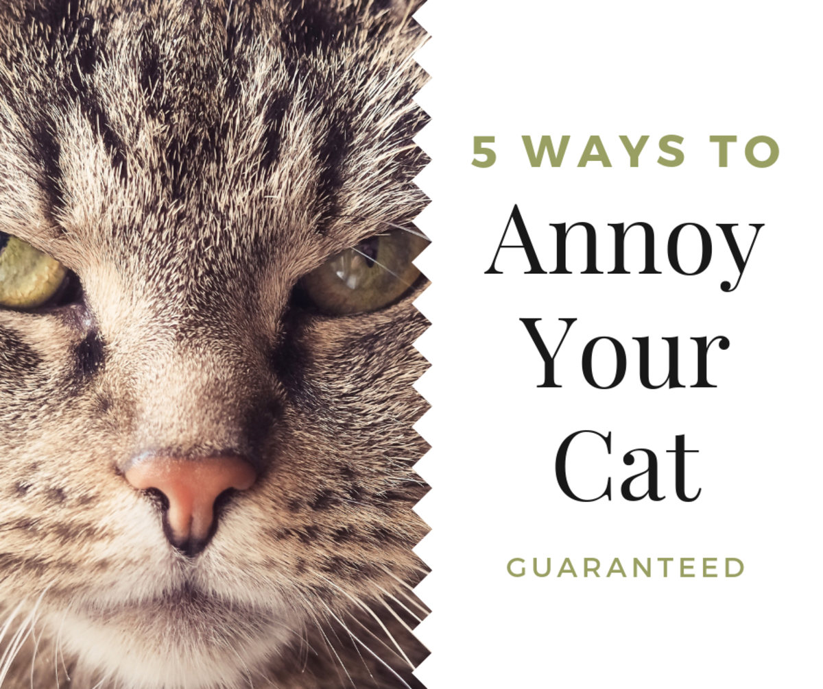 Want to annoy your cant? No judgement here. Here's five easy ways!