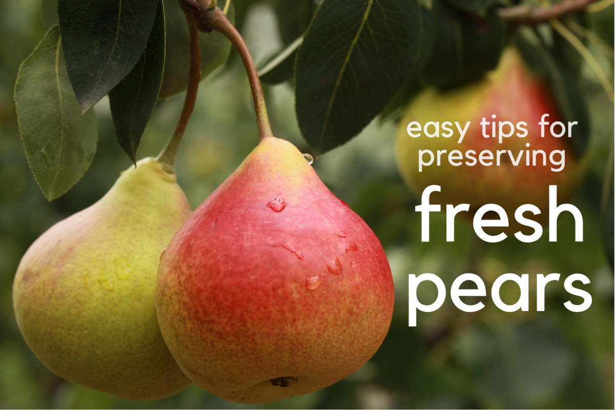 Easy Tips for Preserving Fresh Pears
