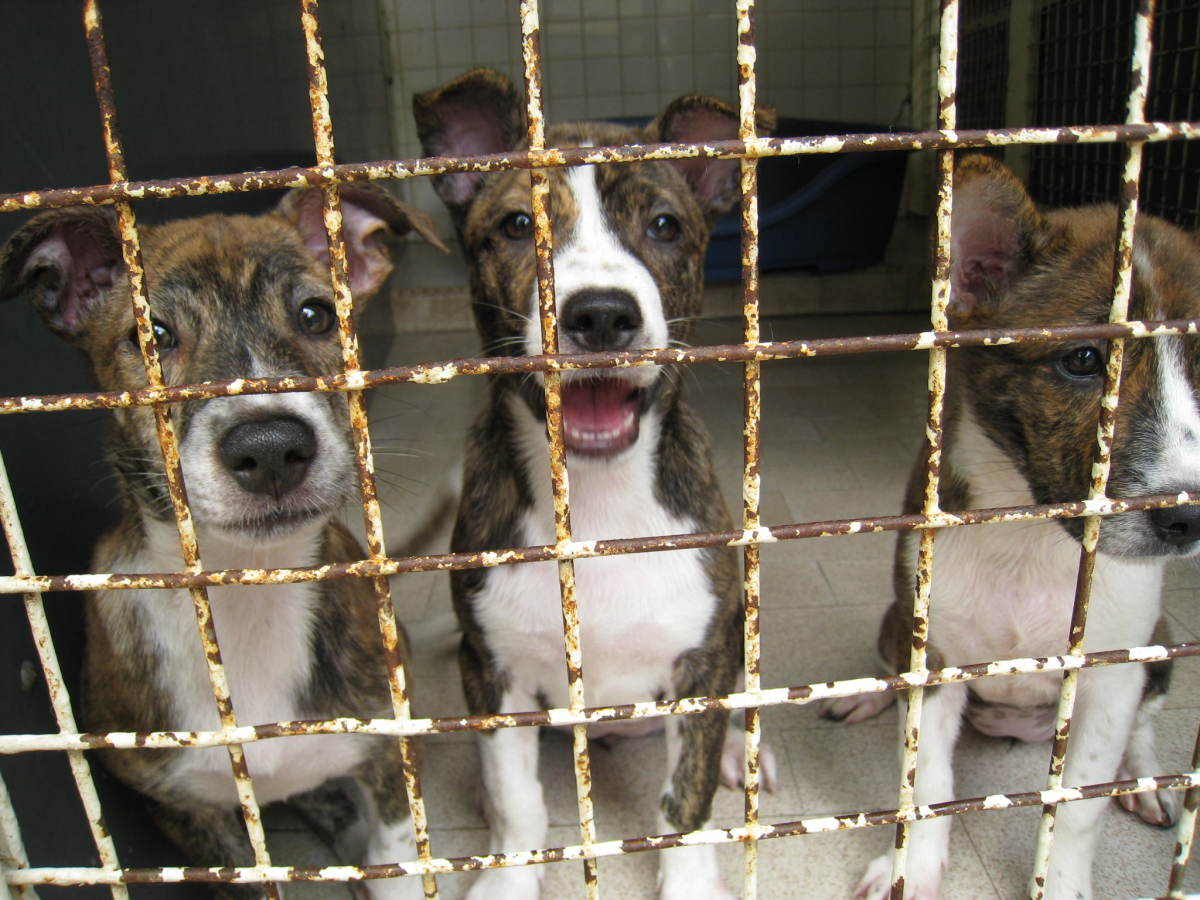 Kennel Cough Is Common in Dog Shelters