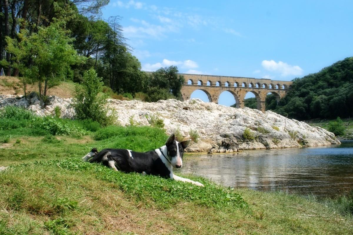Bull Terriers love exploring new surroundings.