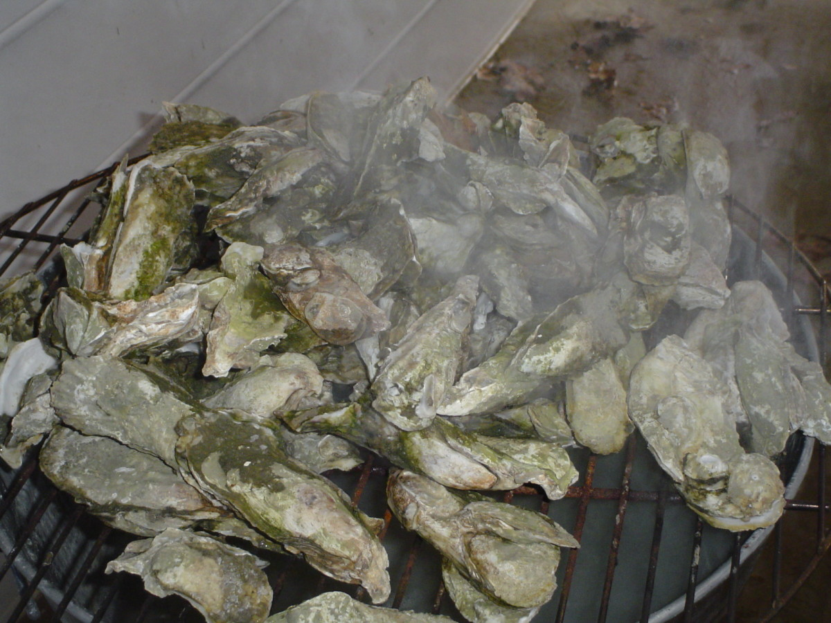 All the steamed oysters you can eat!