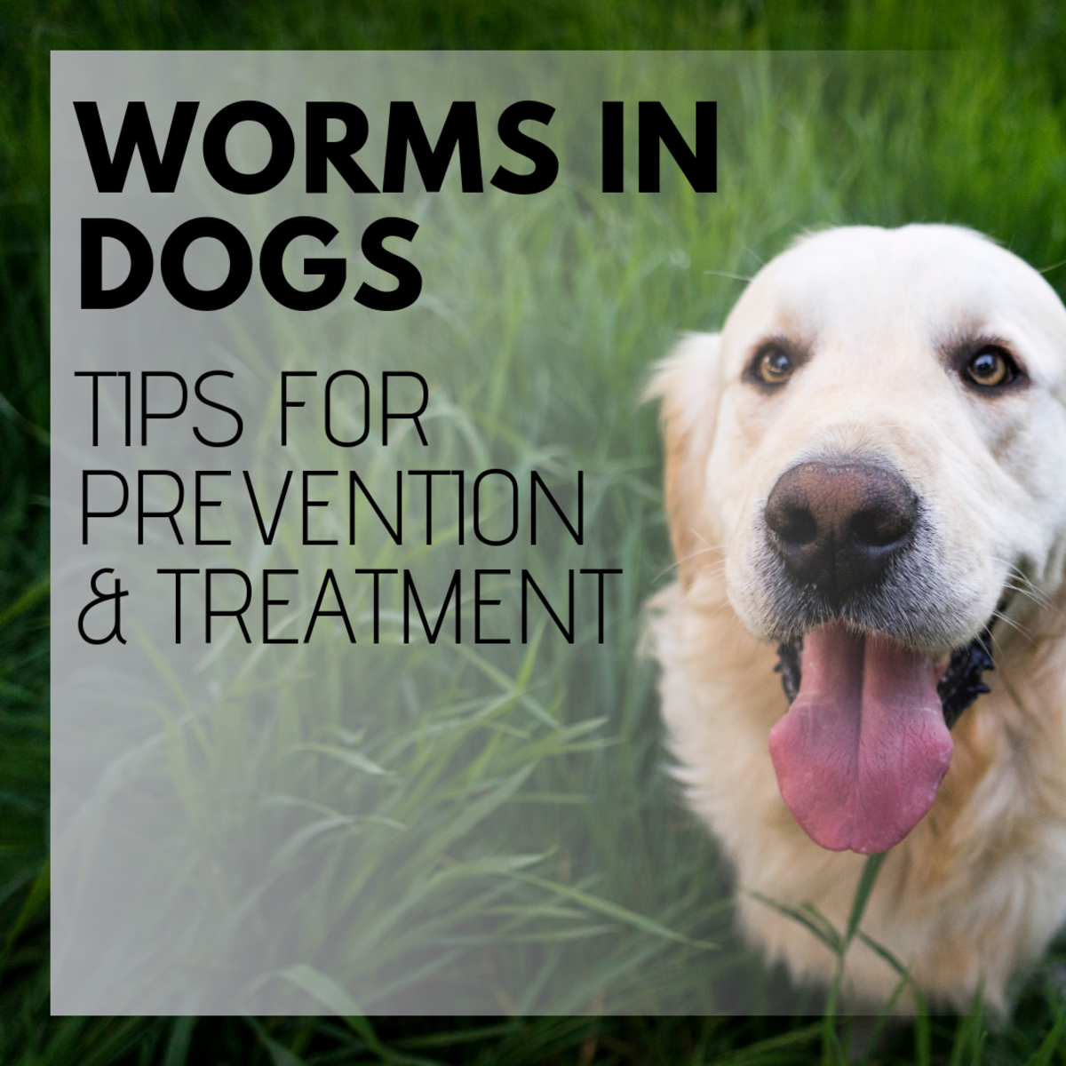 Intestinal Worms in Dogs: Symptoms and Treatment