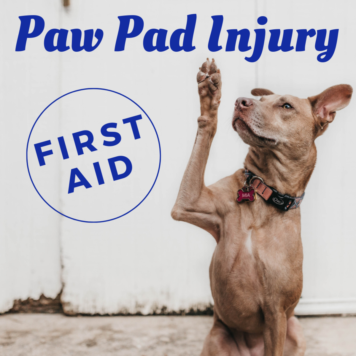 First Aid: How to Treat a Dog's Paw Pad Injury