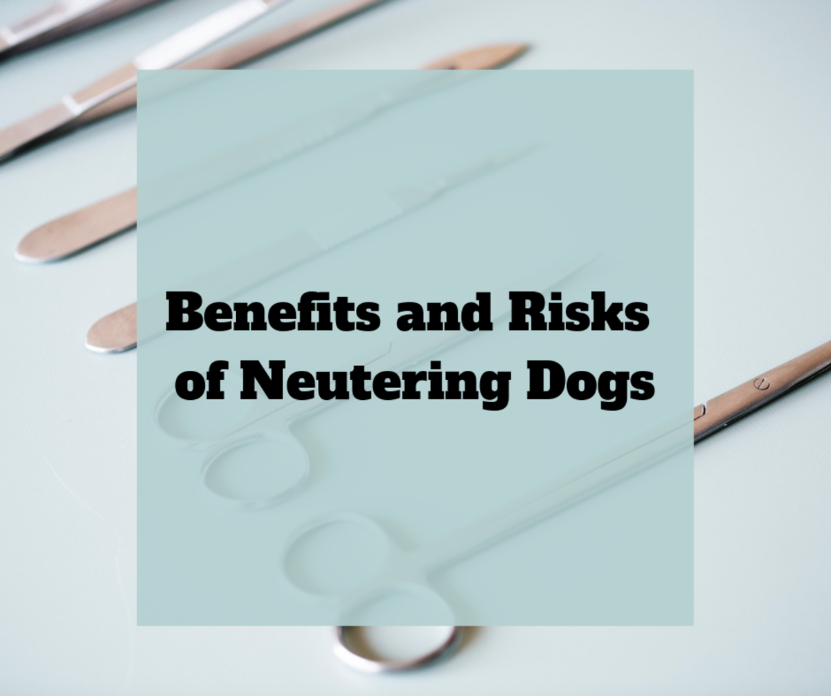 Benefits and Risks of Neutering Dogs