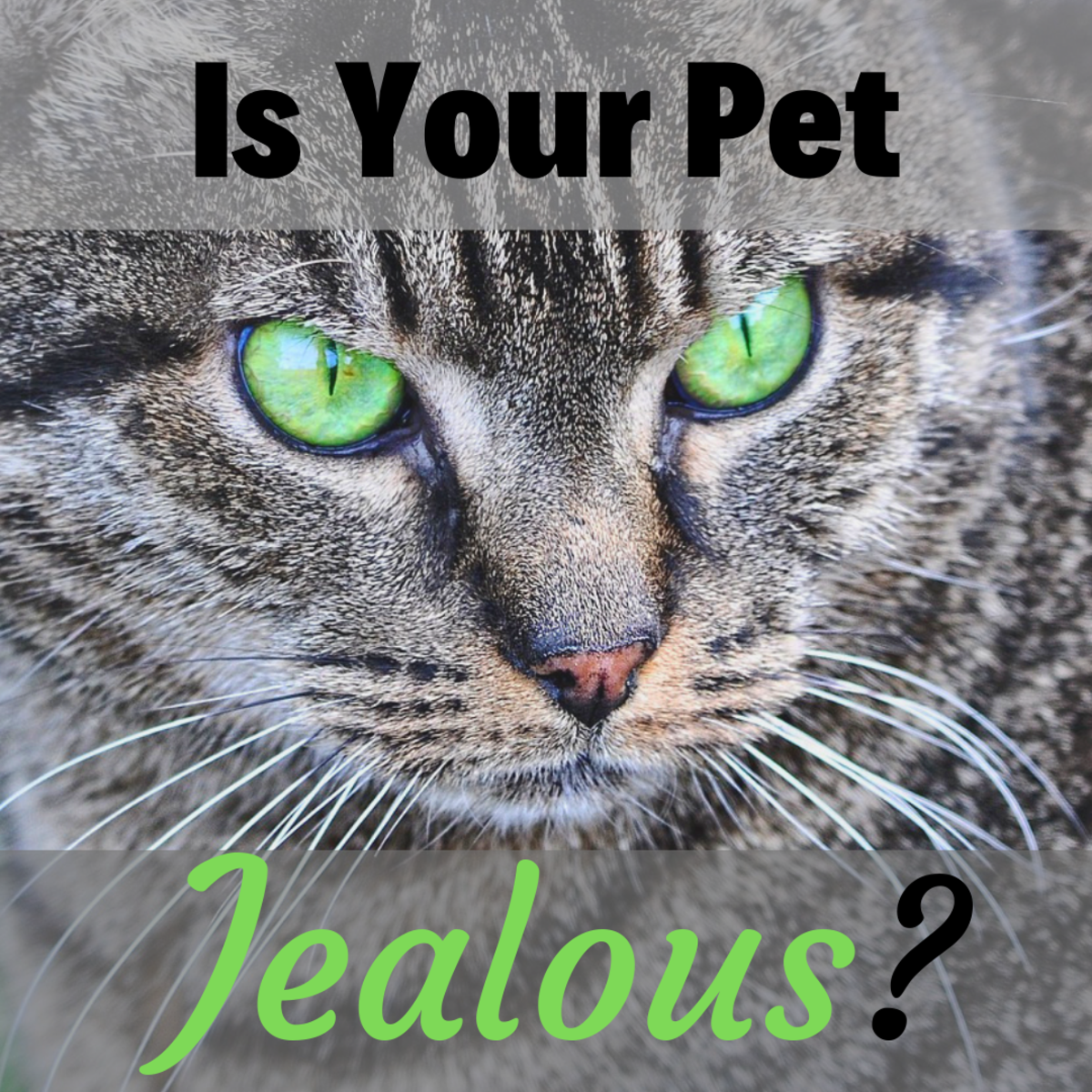How to Recognize and Deal With a Jealous Dog or Cat