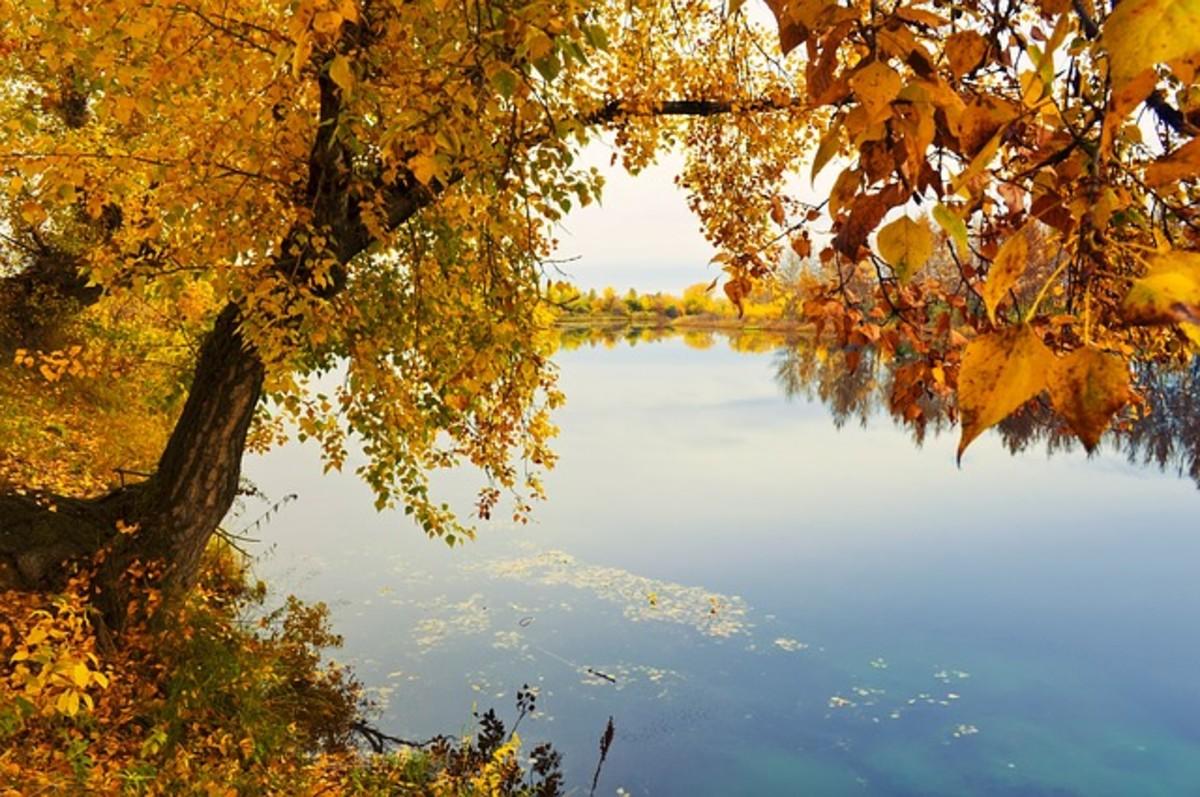 The splendor of the fall.