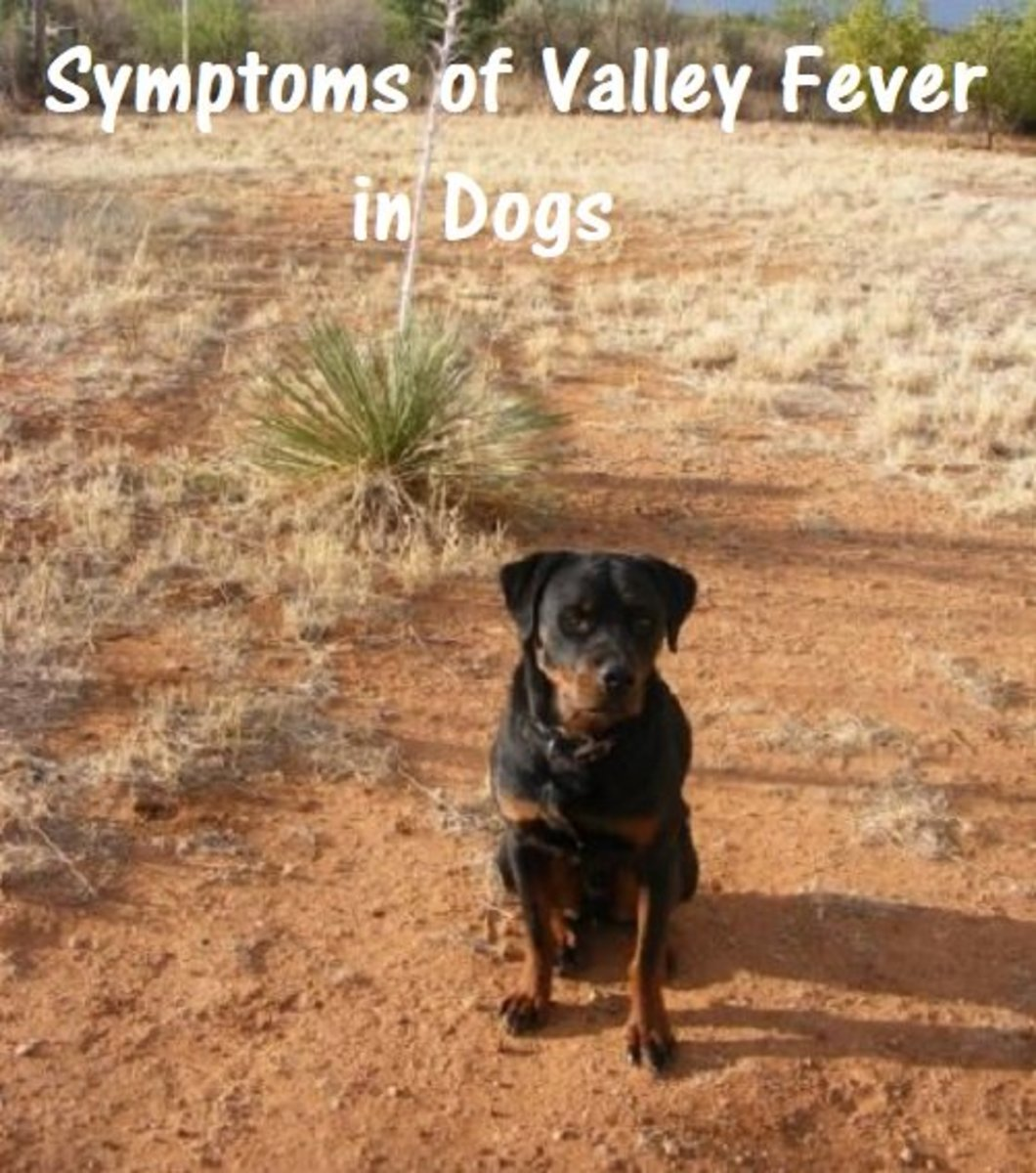 Dogs who live in the Southwestern United States and Mexico can be at risk for Valley Fever