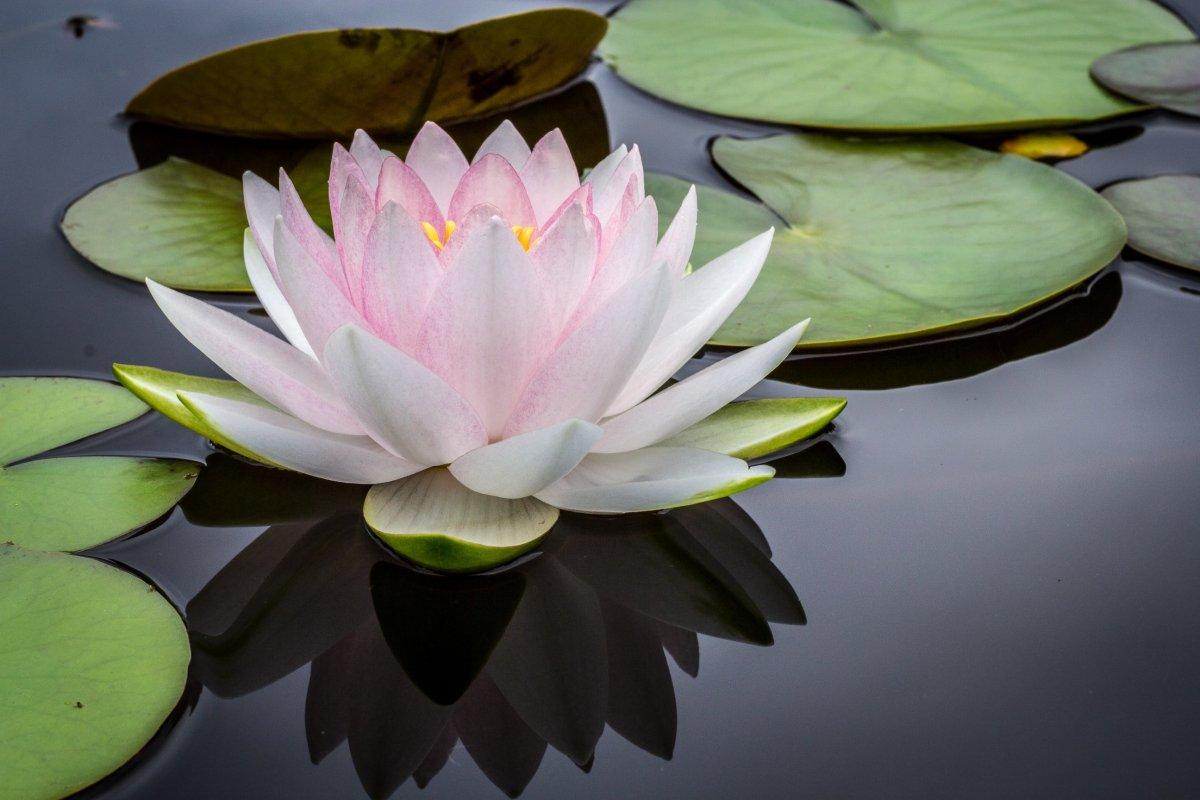 A Beginner's Guide to Meditation: The Zazen Method