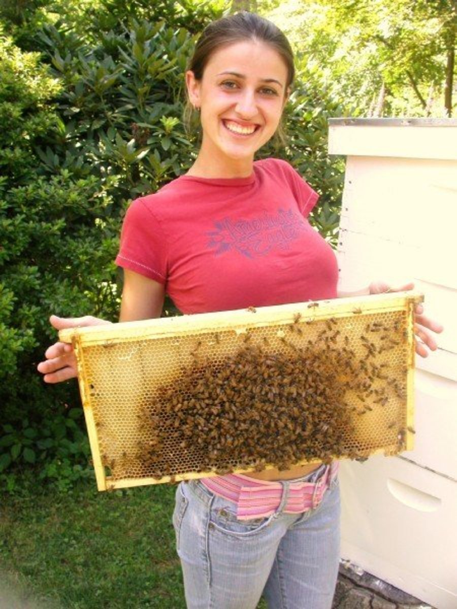 10 Interesting Facts About Honey Bees