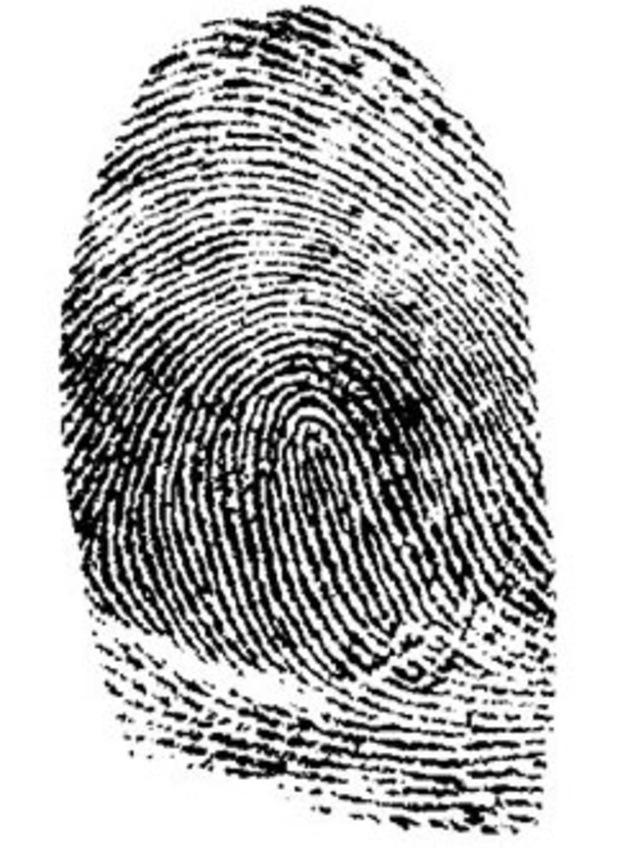 Dactylography: The Scientific Study of Fingerprints