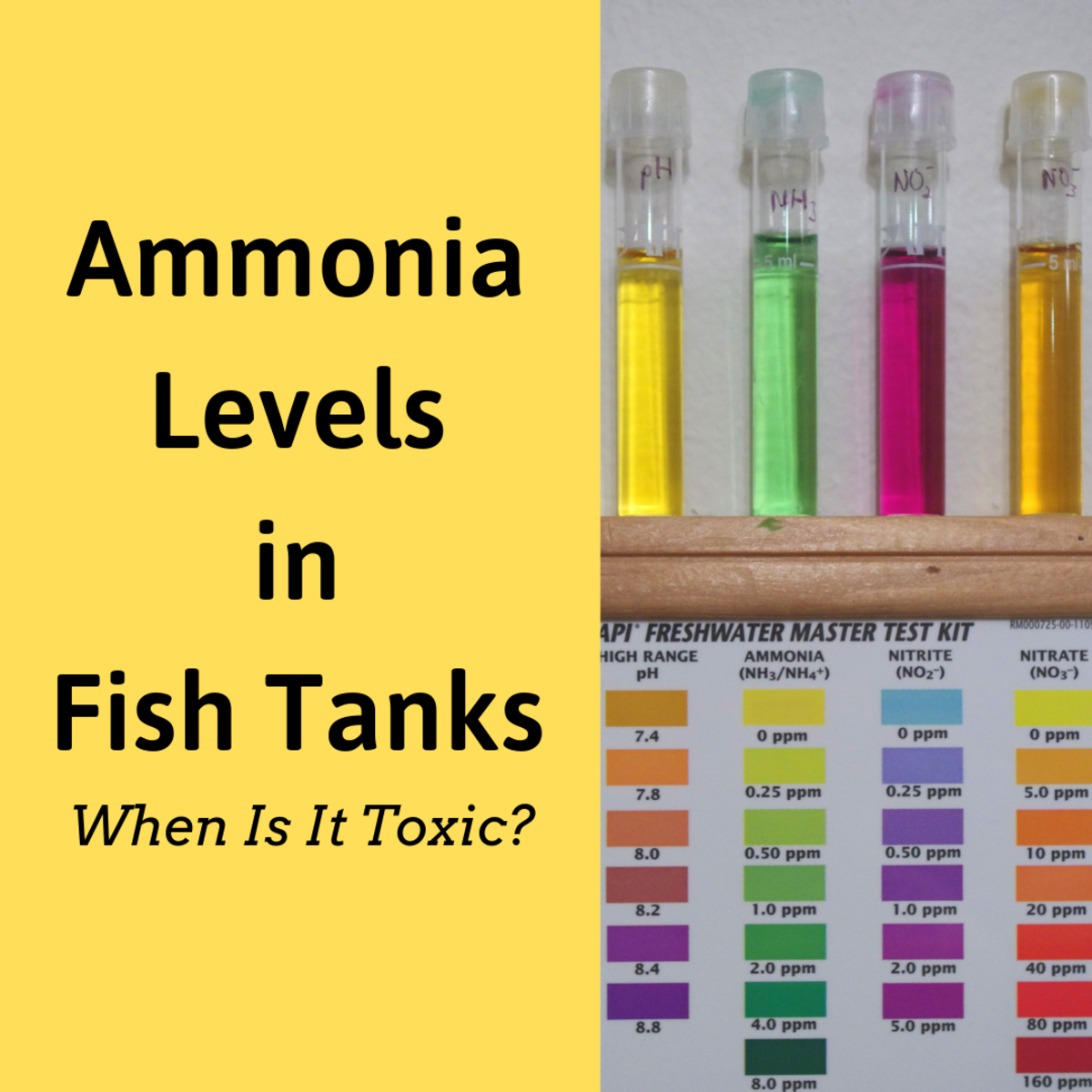 How Much Ammonia Is Toxic to Fish? (Ammonia Levels in Fish Tanks)