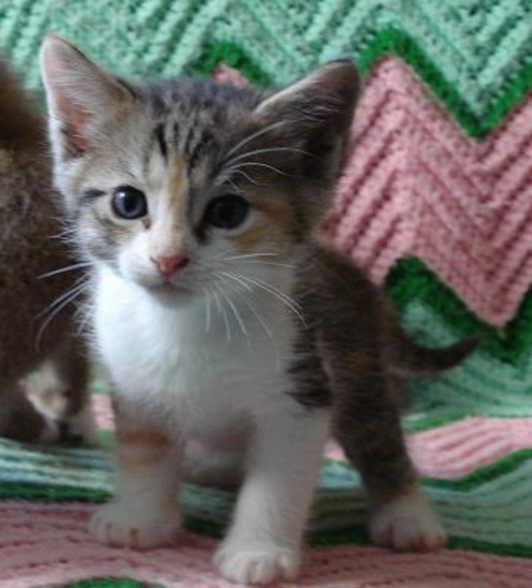 cats caging why cat kittens litter box calico necessary weeks sometimes stay female kitten cage pethelpful tiny always animal habits