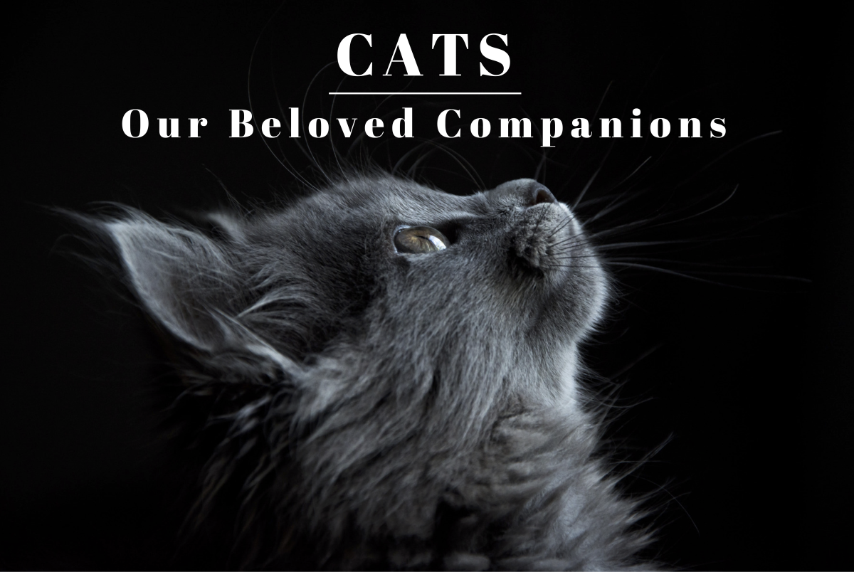 Cats have been by our side throughout the ages. Read on to learn more about these loyal creatures and how we can give our personal companions the best life possible.