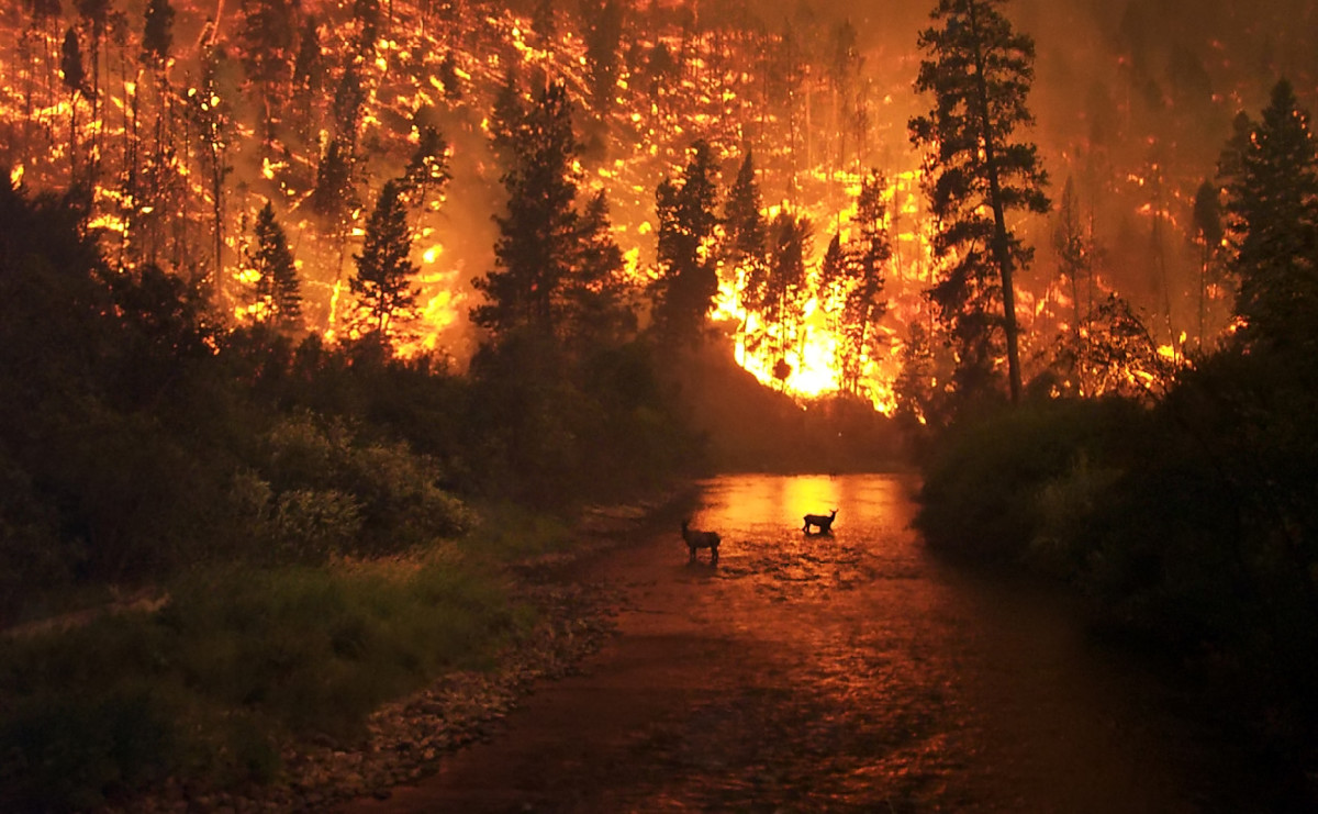 Photograph of a wildfire in the Bitterroot National Forest in Montana, USA dated 2006.