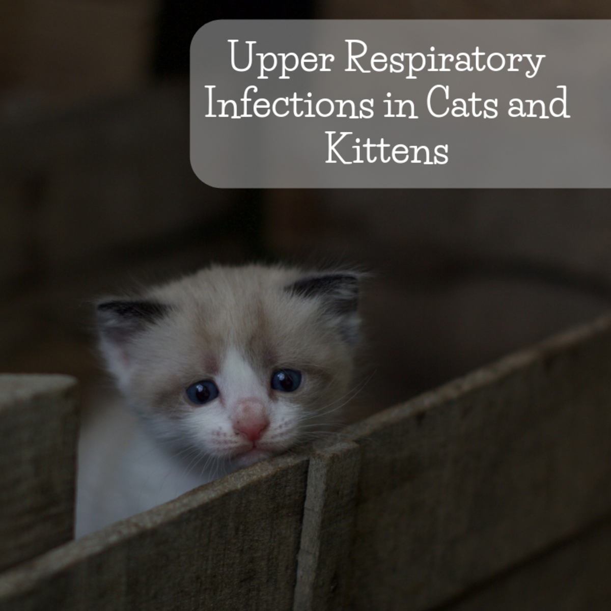 URIs are a common cause of runny and bubbly noses in cats.