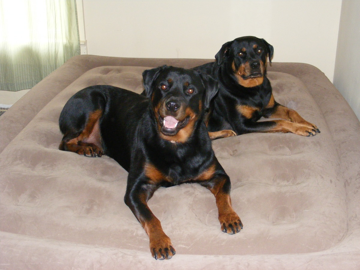 Same-sex dogs are more likely to not get along.