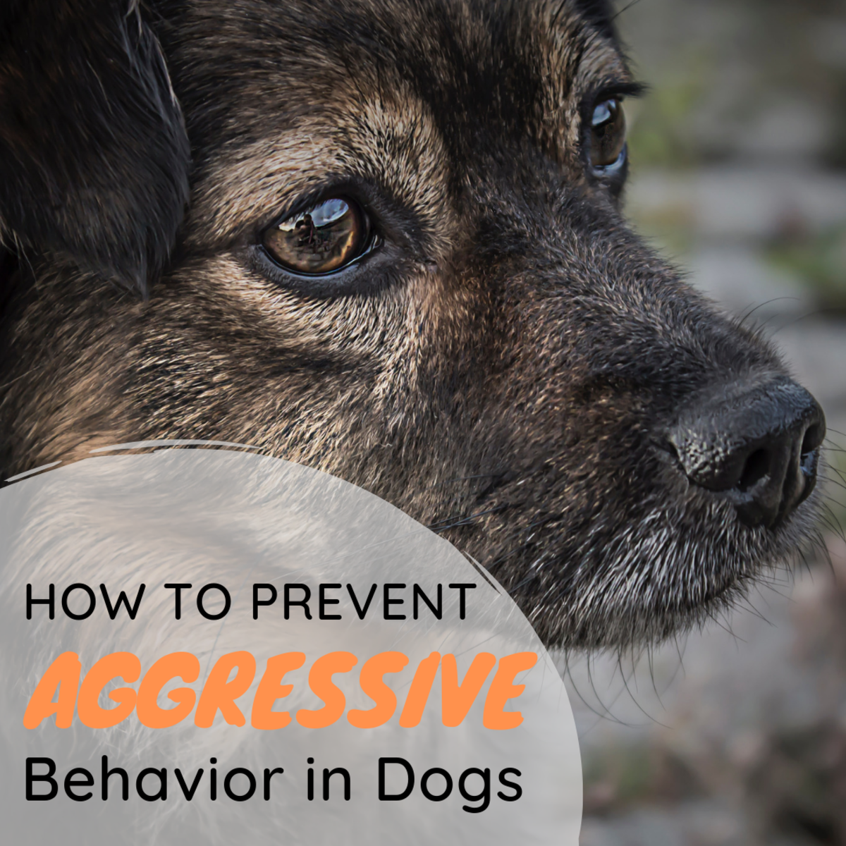 How to Prevent Aggressive Behavior in Dogs