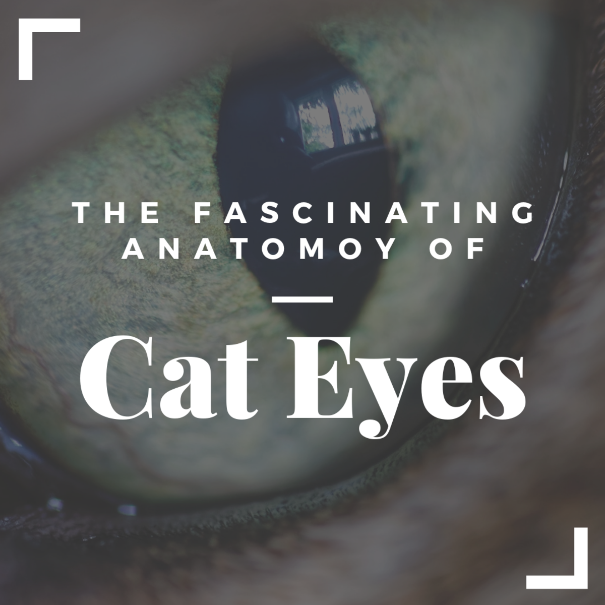 Cats' eyes are extremely complex. They evolved to help them survive in the wild.