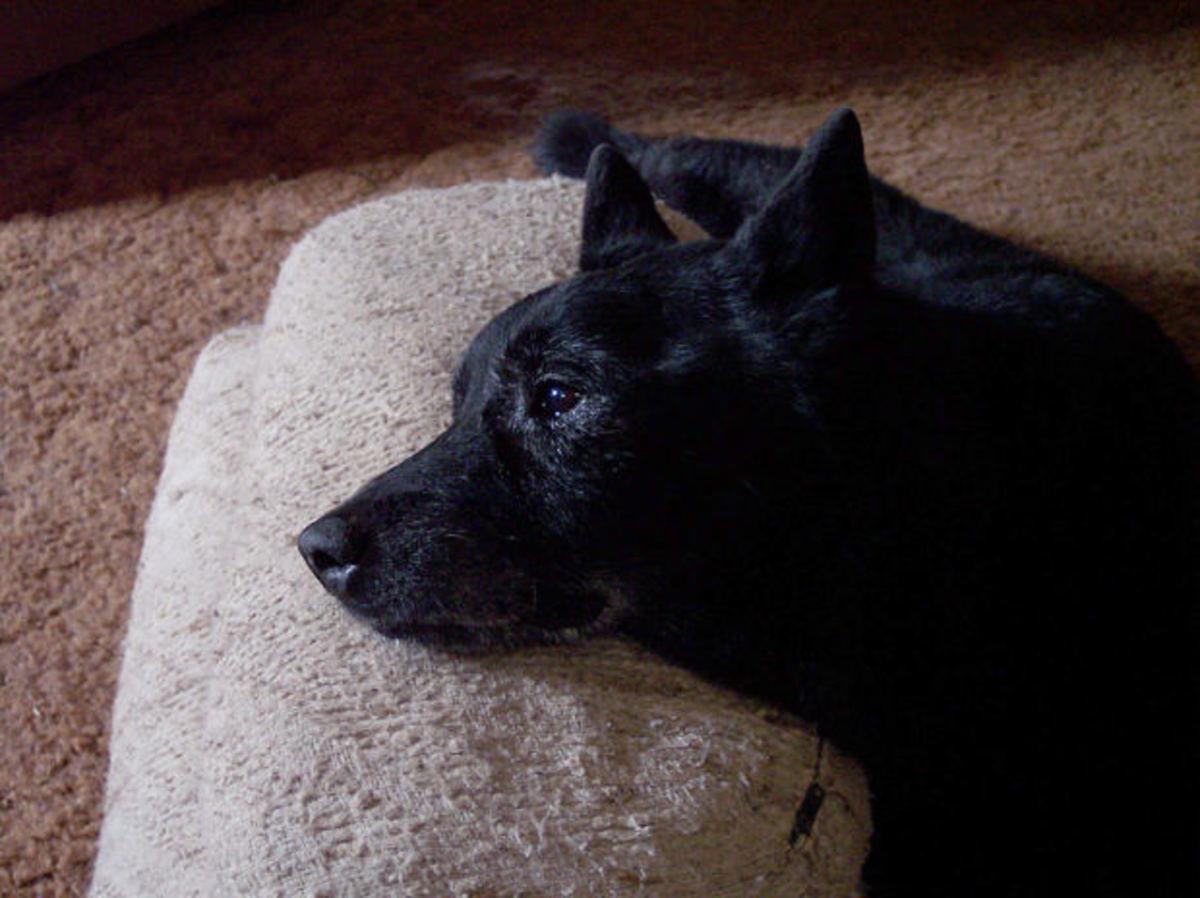 "Dog Euthanasia: ""Putting the Dog Down"""