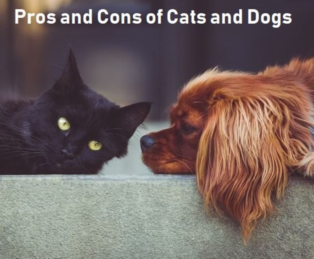 Pros and Cons of Cats and Dogs