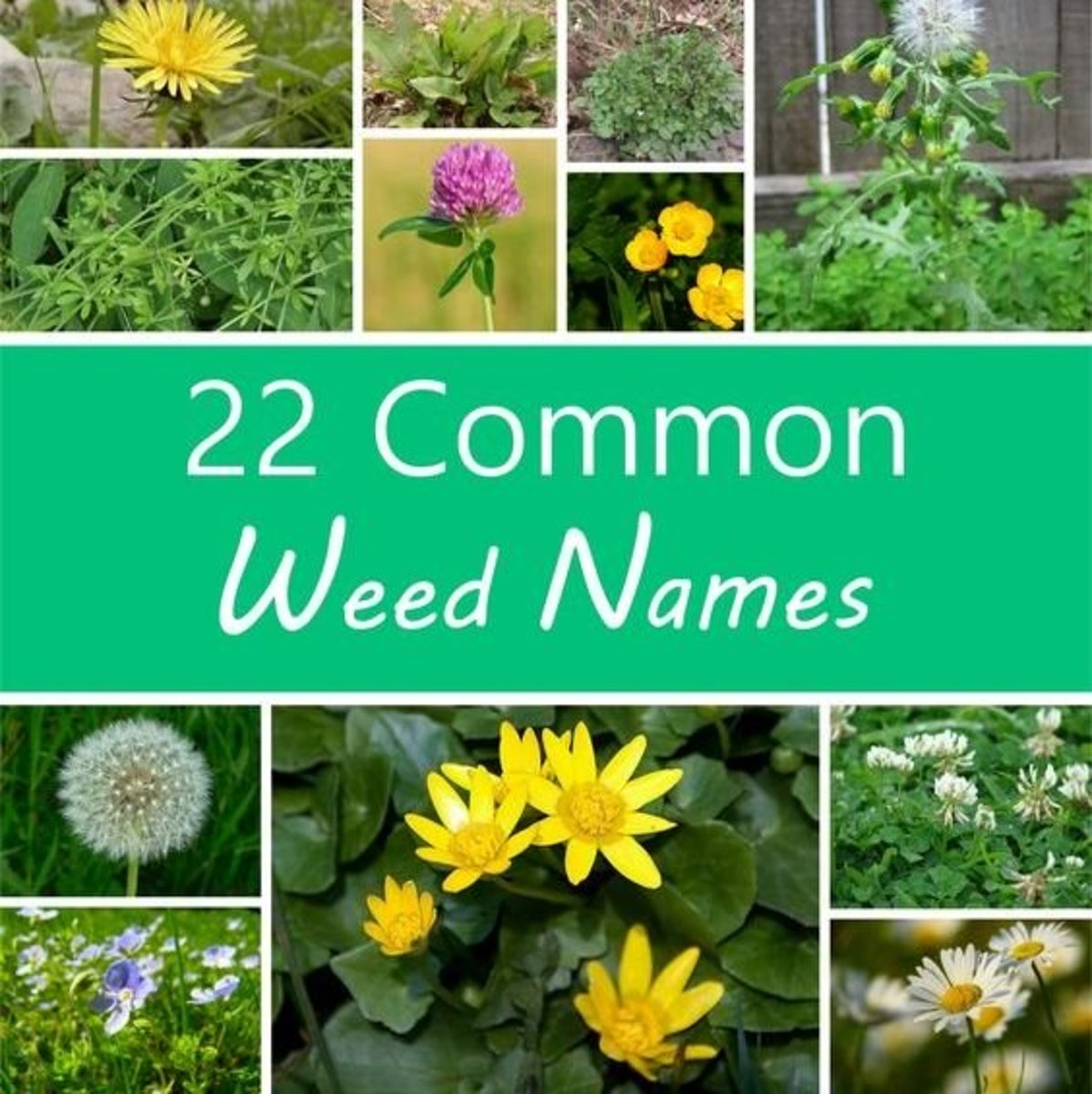 A Guide To Names Of Weeds With