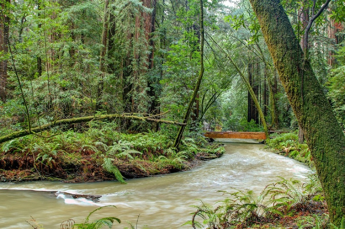 Magnificent Muir Woods National Monument: Thank You, John Muir