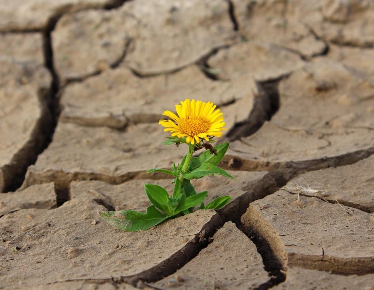 Nature's Secret Is Patience