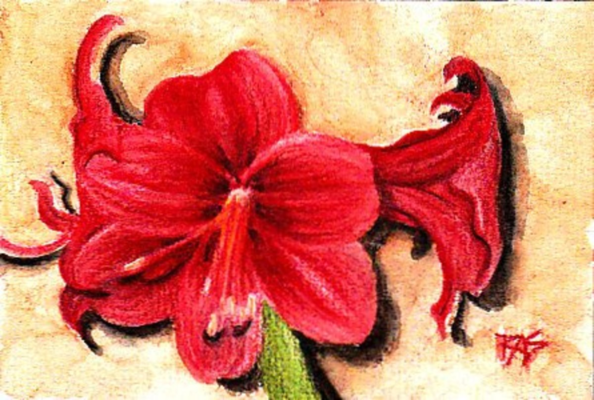 Amaryllis 4 X 6 In Derwent Inktense On Cold Press Watercolor Paper