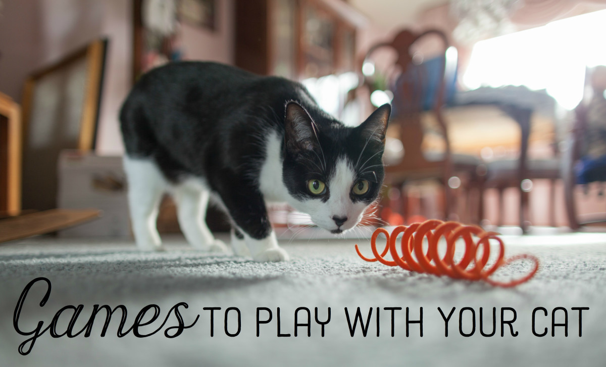 Cats often like playing hunting and batting games. It's easy to use simple objects to play with your cat!