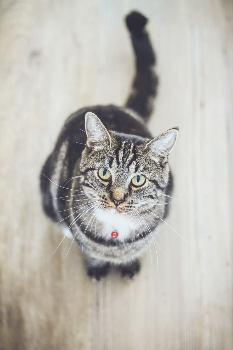 If your cat has cancer, you need information so you can make an informed decision on treatment options.