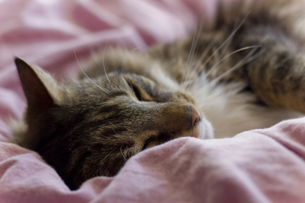 12 Warning Signs of Cat Cancer Every Owner Should Know