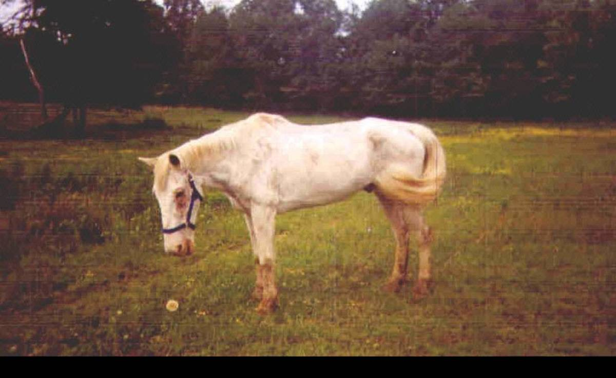 The Right Way to Take Care of a Rescue Horse