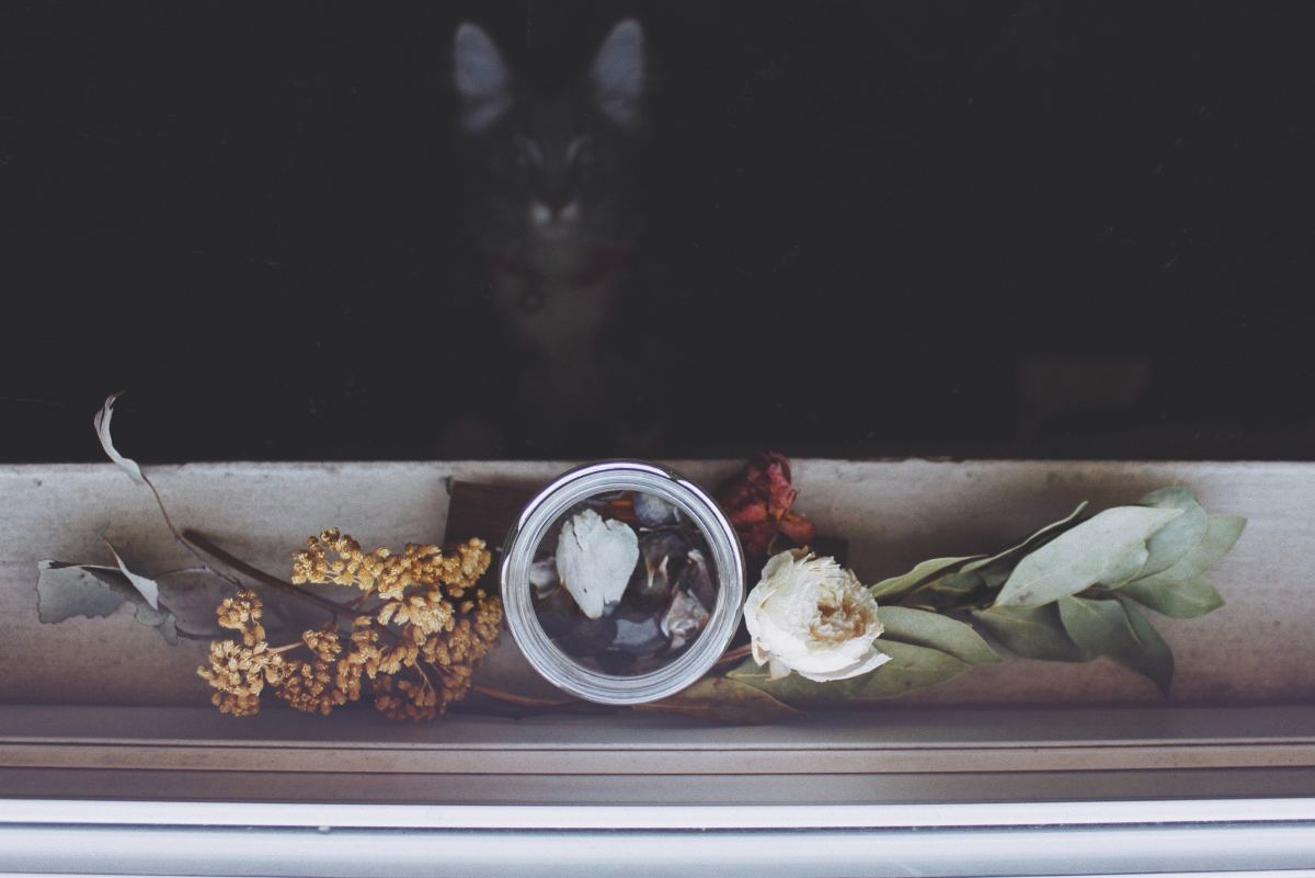 how-to-bury-a-pet