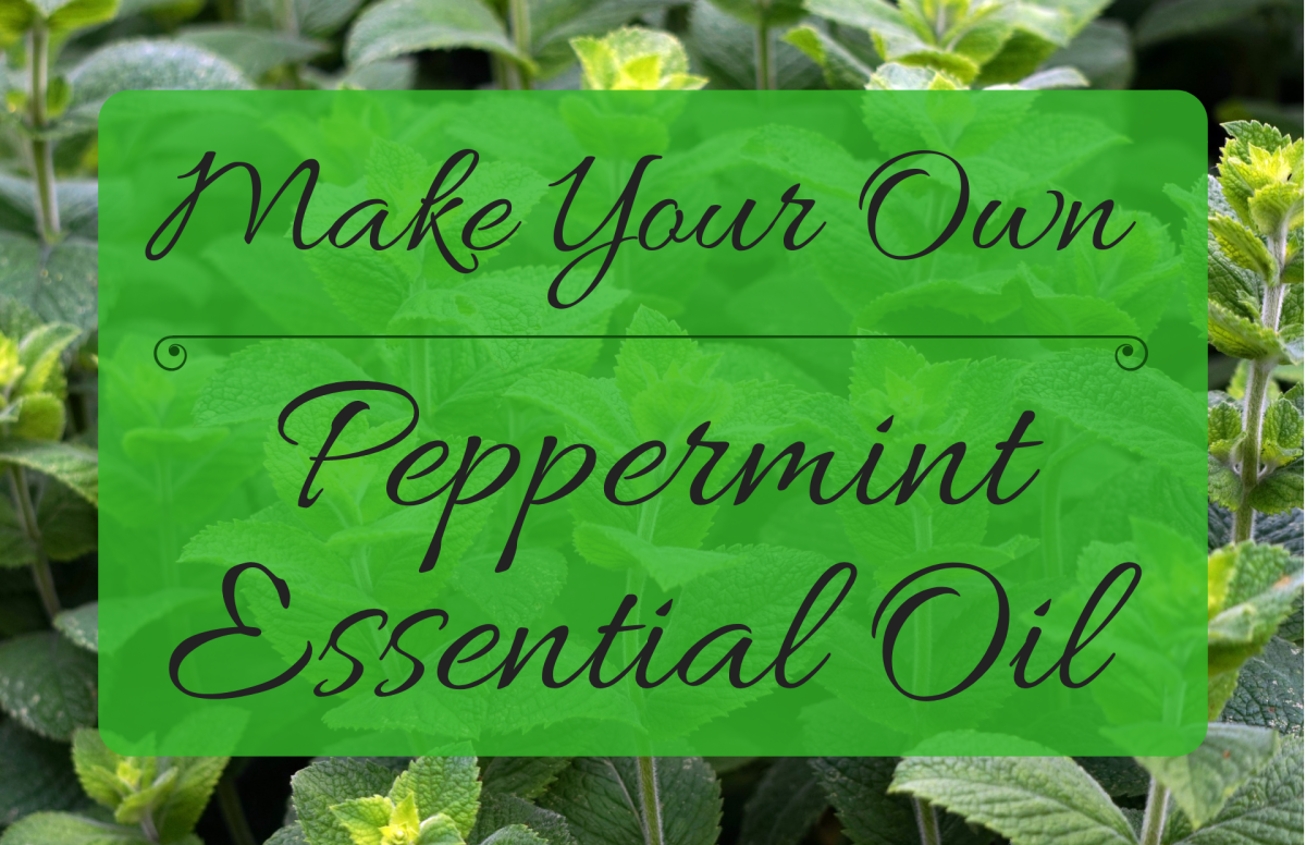 Using only some peppermint and a few household items, you can easily make your own peppermint essential oil at home. This guide will show you how.