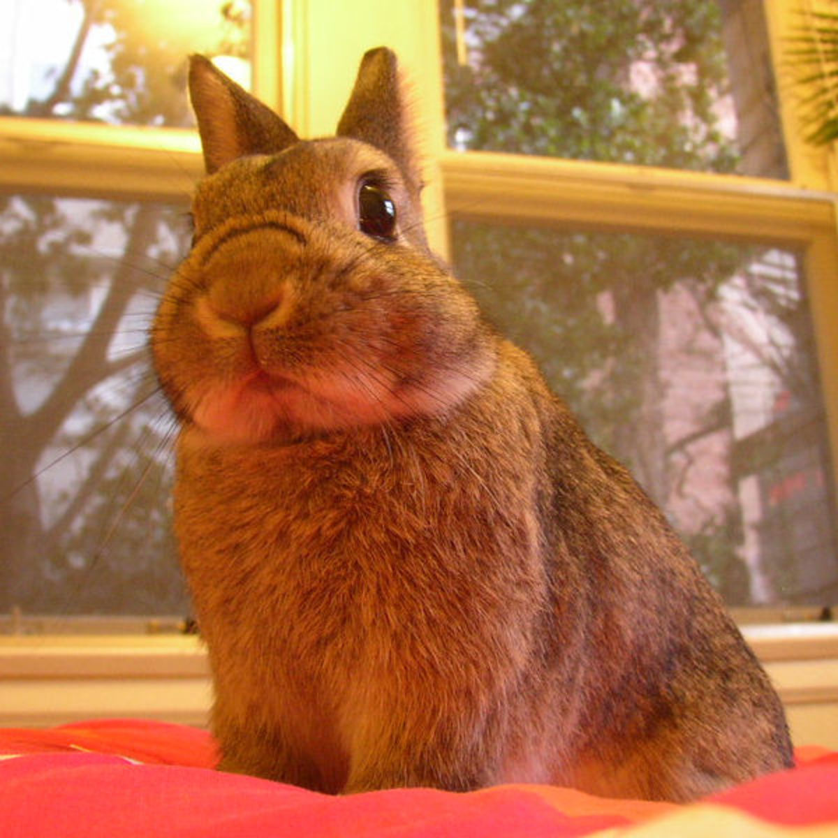 How to Help Pet Rabbits Adjust to a New Environment: How Long Does it Take to Settle a Bunny or Bunnies in a New Home?