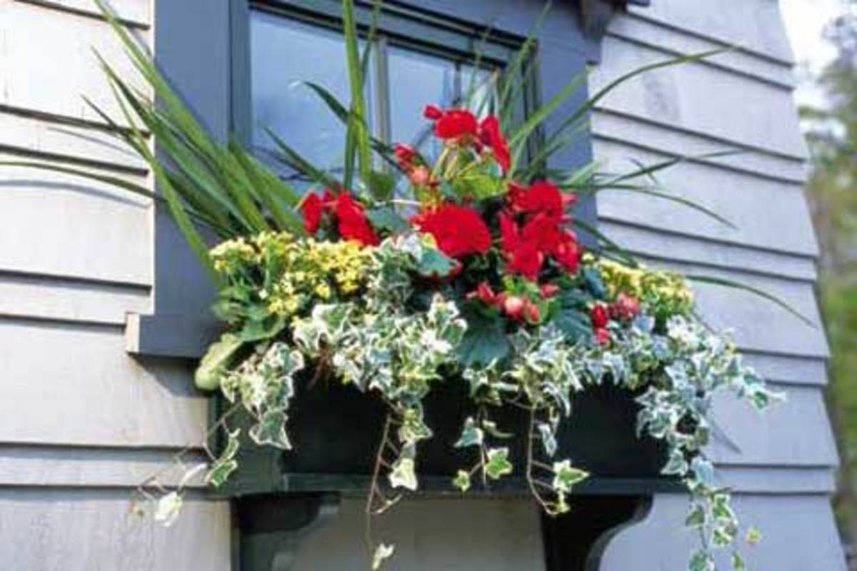Window Box Designs For Full Sun