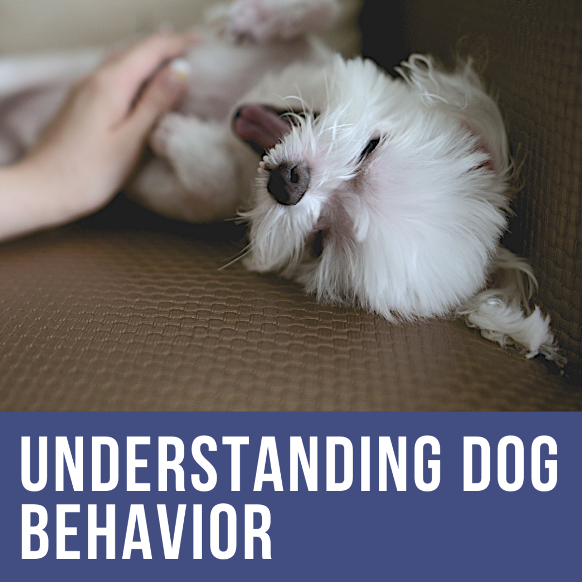 Understanding Dog Body Language: How to Calm Your Dog