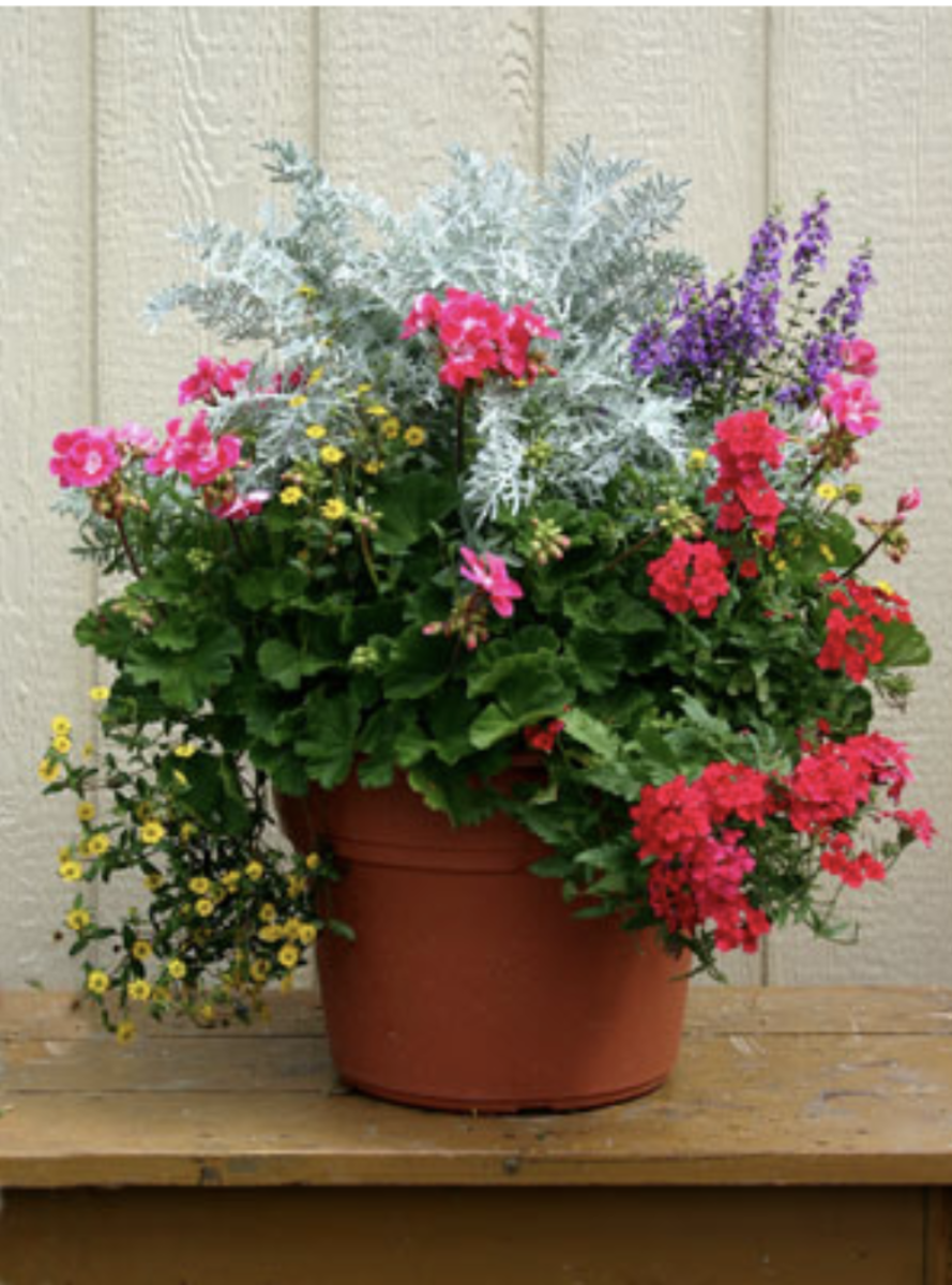 Outdoor Container Gardening Planting A Beautiful Pot Of Flowers