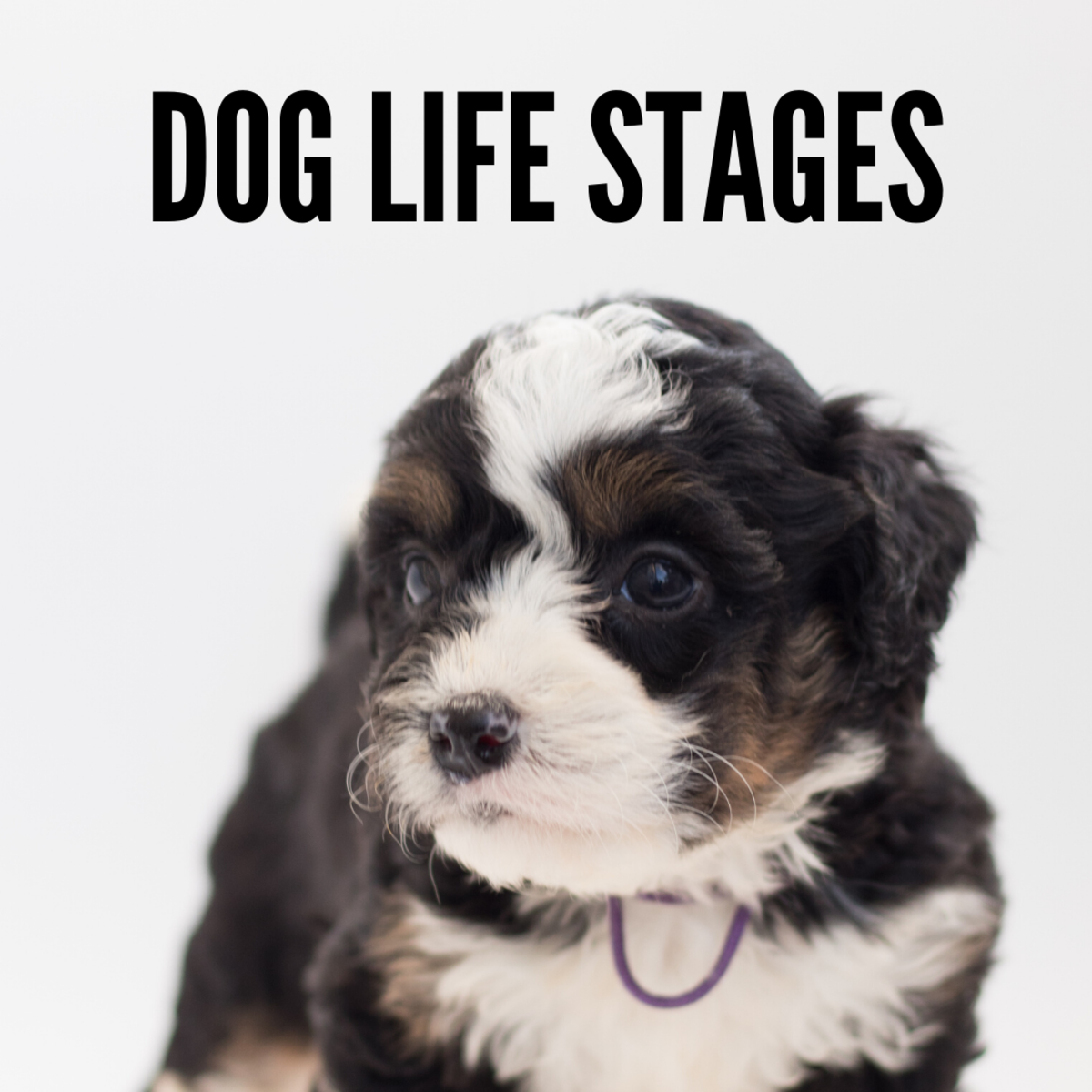 Puppy Life Stages Explained